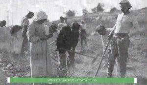 Подготовка земли перед созданием нового поселения