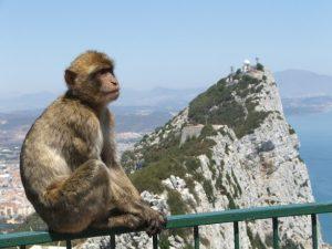 Гибралтар. Маготы. На посту