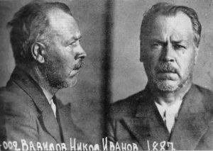 Академик АН СССР Н.И. Вавилов в Саратовской тюрьме № 1