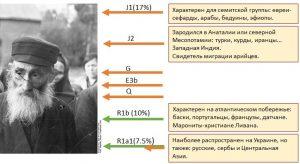 Рисунок 1: Гаплотипы Y-хромосомы евреев-ашкеназов