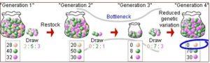 Рисунок 2: Генетическое бутылочное горлышко