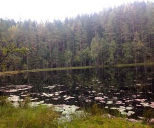 Синее озеро, Нарочанские озера